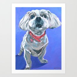 Malti Poo Dog Portrait Art Print
