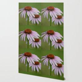 Purple Coneflower Pair - A Butterfly's Best Friend Wallpaper