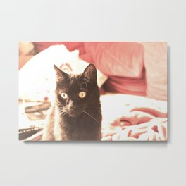 Chilly my Lovecat Metal Print