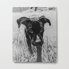 Doggy in the Field // B&W Hiking by Rustic Abandoned Log Cabin Summit Colorado Metal Print