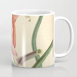 Tillandsia bulbosa var. picta Coffee Mug