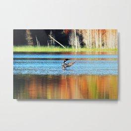 Riley Lake Loon Metal Print