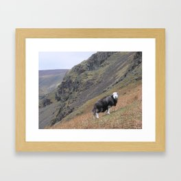Herdwick Sheep Framed Art Print