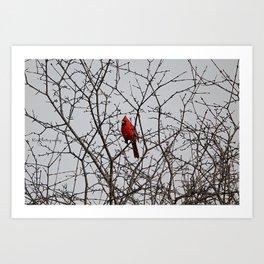 Cardinal Sticks Art Print