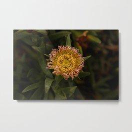 Wildflower at Mavericks Beach - No. 2 Metal Print