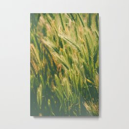 green raw wheat Metal Print