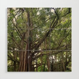 Banyan Beauty Wood Wall Art