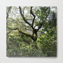 Guatemalan Tree Time Metal Print