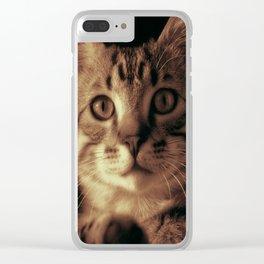 Kitten In The Window Clear iPhone Case