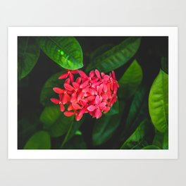 Secret Red Bunch Of Blowers Among Bright Green Leaves Nature Art Art Print
