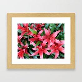 Red guzmania tropical flower Framed Art Print