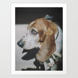 Tilly the wonderdog... Art Print