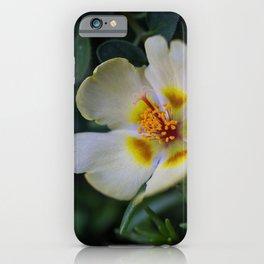 Portulaca Flower up close iPhone Case