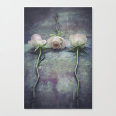 Three roses  III Canvas Print