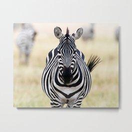Zebra looking at you Metal Print