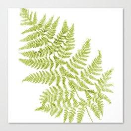 Fresh Fern Modern Botanical Canvas Print