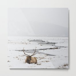 Elk Resting in the Snow Metal Print