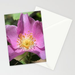 One Wild Rose Stationery Cards