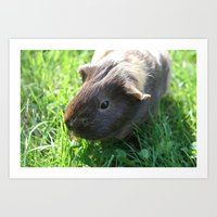 guinea pig Art Prints featuring Guinea Pig by Rose&BumbleBee