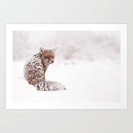 A Fox Fantasy (Red Fox in the snow)  Art Print