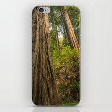 Giant Redwoods iPhone Skin