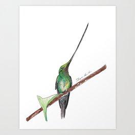 Sword Billed Humming Bird 2 Art Print