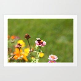 Busy Summer Bee Art Print