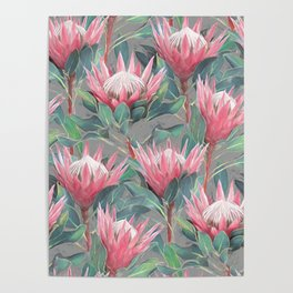 Pink Painted King Proteas on grey Poster