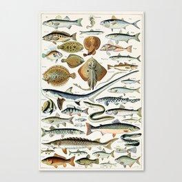 Vintage Illustration Fish Chart Canvas Print