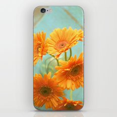 Daisy Chair iPhone & iPod Skin