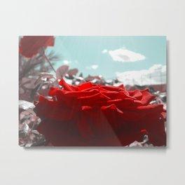 Beautiful Red Rose, lighting is so lovely. Metal Print