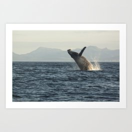 Breaching Whale Photography Print Art Print