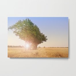 Sunset over cornfield with tree Metal Print