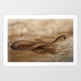 Snake reflection in water puddle Art Print