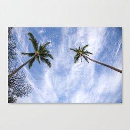 palm skies Canvas Print