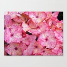 Pink Hydrangea Canvas Print
