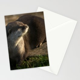 Otter Looking Into The Sunshine Stationery Cards