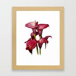Purple Calla Lilies Framed Art Print
