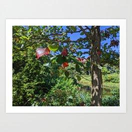 Hints of Fall Foliage Art Print