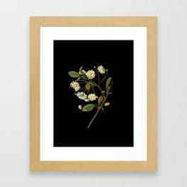 Prunus Cerasus Mary Delany Vintage Botanical Paper Flower Collage Framed Art Print