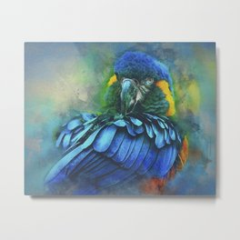 Macaw Magic Metal Print