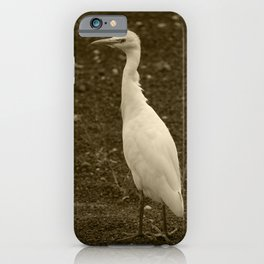 Cattle Egret Lanzarote Tint iPhone Case