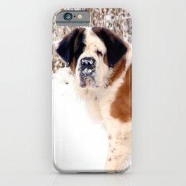 Snow sniffing St Bernard dog iPhone Case