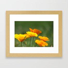 Sunshine Cups Framed Art Print