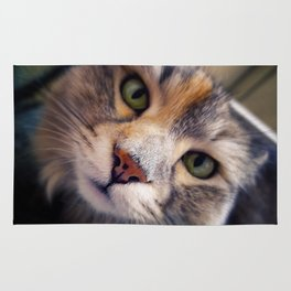 Siberian cat. The Cleopatra's nose. Rug