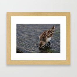 What a meal! Framed Art Print