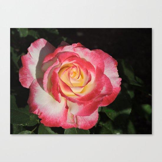 Multi-Hued Rose Canvas Print