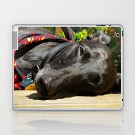 Lazy Lurcher Laptop & iPad Skin