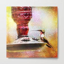 Ruby Throated Hummingbird at Feeder Art Metal Print