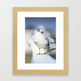 Seagull Gerahmter Kunstdruck